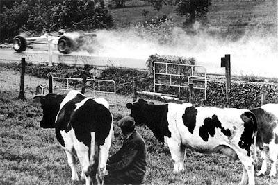 Грэм Хилл на Lotus 49B на Гран-при Бельгии 1968 проезжает мимо коров