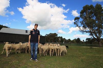 Себастьян Феттель со стадом овец на Гран-при Австралии 2011