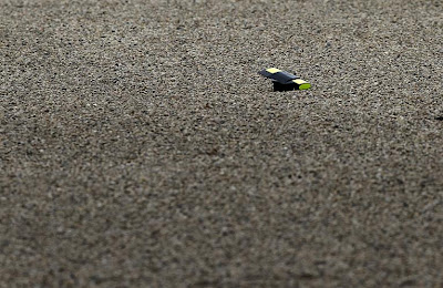 камера Фелипе Массы в гравии Альберт-Парка в третей свободной практике на Гран-при Австралии 2011