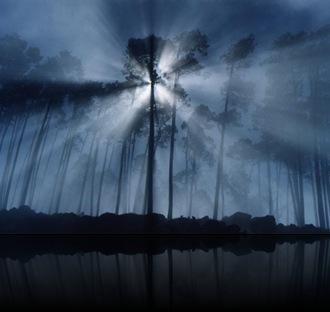 13_rays_fog_trees_rmb