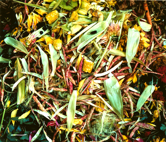 The Very Rich Hour of a Compost Pile by John Pfahl