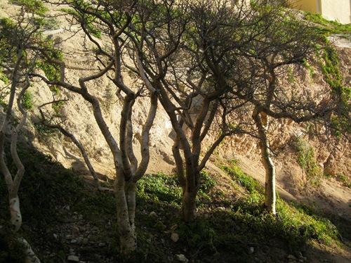 Cabo San Lucas 075