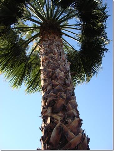 Palm Springs 3 138