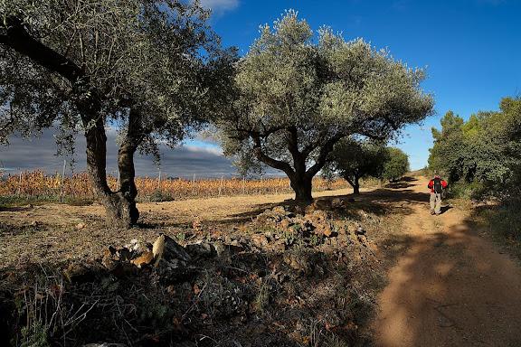 Camí del Mas de Cabaló. Vinyes de la  DOQ Priorat. El Molar, Priorat, Tarragona