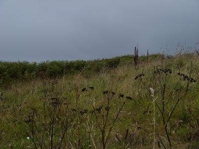 草むらと黒雲