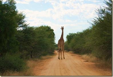 Kruger Park 156