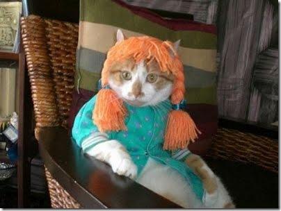 gatos disfrazados (23)