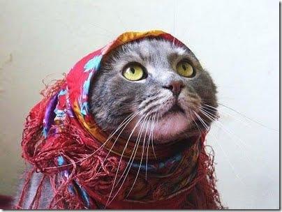 gatos disfrazados (24)