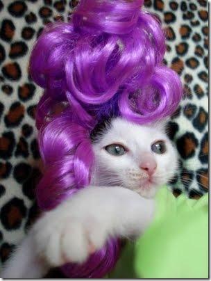 gatos disfrazados (3)
