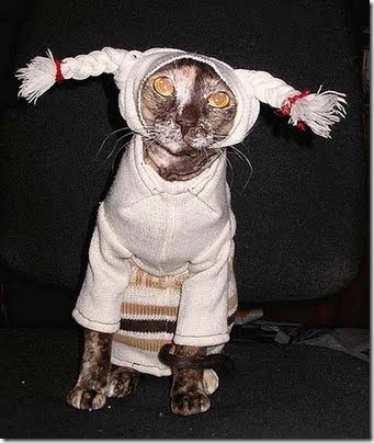 gatos disfrazados (6)