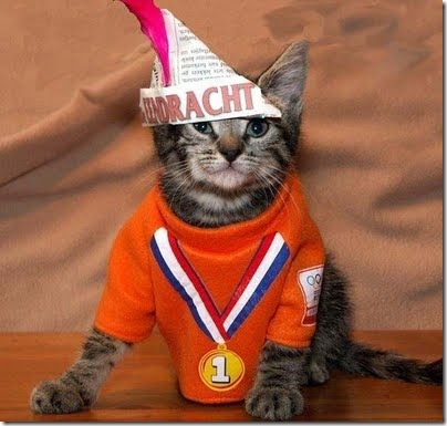 gatos disfrazados (10)