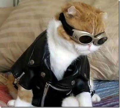 gatos disfrazados (13)