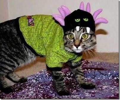 gatos disfrazados (14)