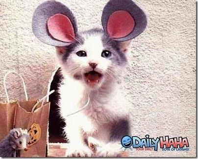 gatos disfrazados (18)