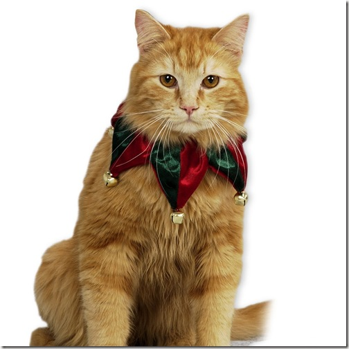 animales (4) Navidad,gato vestido duende