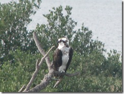 5778 Osprey South Padre Island Texas