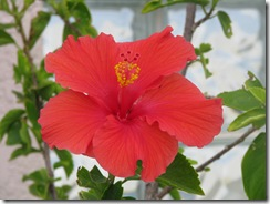 5248 Hibiscus at Ramada Inn South Padre Island Texas