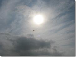 5459 Kite Flying South Padre Island Texas