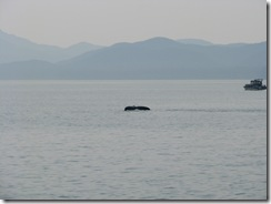 4481 Whale Watching Juneau AK