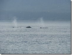 4528 Whale Watching Juneau AK