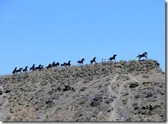 5181 Wild Horses Monument WA