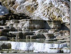 5821 Mammoth Hot Springs Terraces Yellowstone National Park