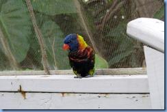 7634 Rainbow Lorikeet Coral World Charlotte Amalie St Thomas USVI