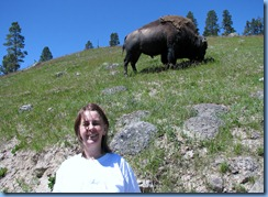 9227 Bison on Pathway Mud Volcano Area YNP WY