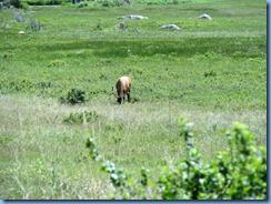 8600 Elk on Bear Lake Road RMNP
