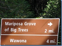 2166 Mariposa Grove Sequoia Trees YNP CA