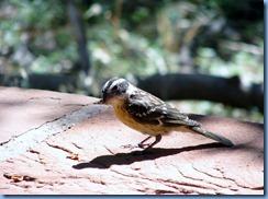 3481 Weeping Rock Zion National Park UT