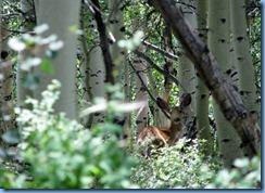 4509 Mule Deer Scenic Byway 12 UT