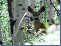 4517 Mule Deer Scenic Byway 12 UT