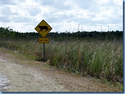 7388 Everglades National Park FL - Royal Palm Rd