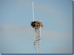 7474 Everglades National Park FL- Flamingo Visitor Center - Osprey nest