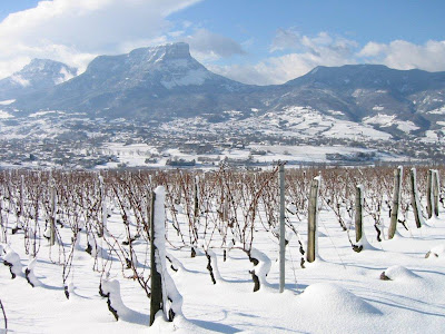 Fresh snow on the Chignin vineyards - view to Mont Granier