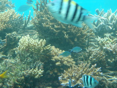 Fish, Great Barrier Reef