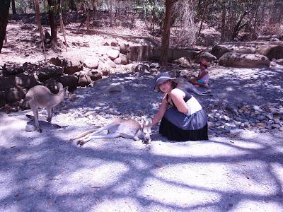 Kangaroo, Cairns Tropical Zoo