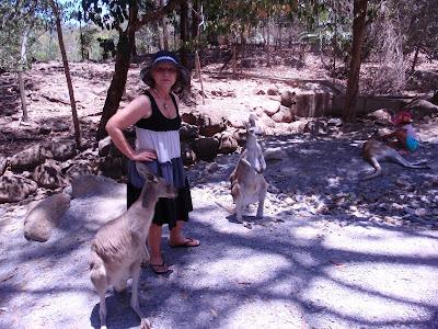 Kangaroos, Cairns Tropical Zoo