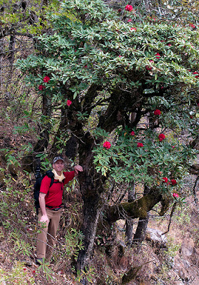 Rhododendron and Chuck