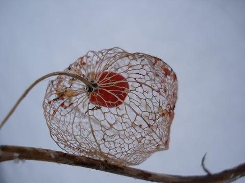 joedekirsebær