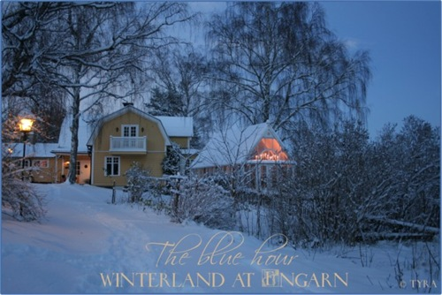 winterland Large Web view