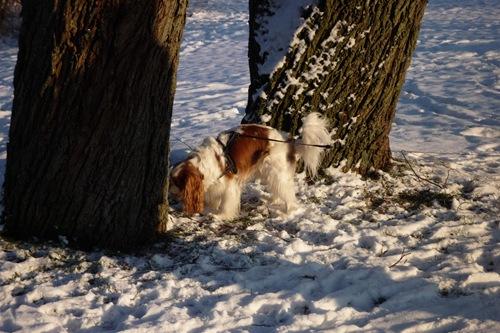 Frede på vintertur