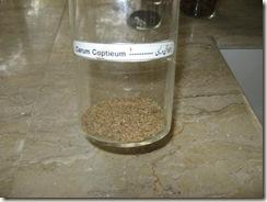 carum coptieum-ijwayein - specimen