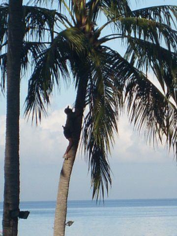 Lombok4%20Palme.jpg
