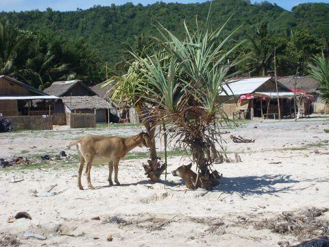 lombok2%20kota4.jpg