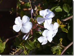 lovely flowers in garden