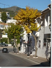 autumn colours in mijas