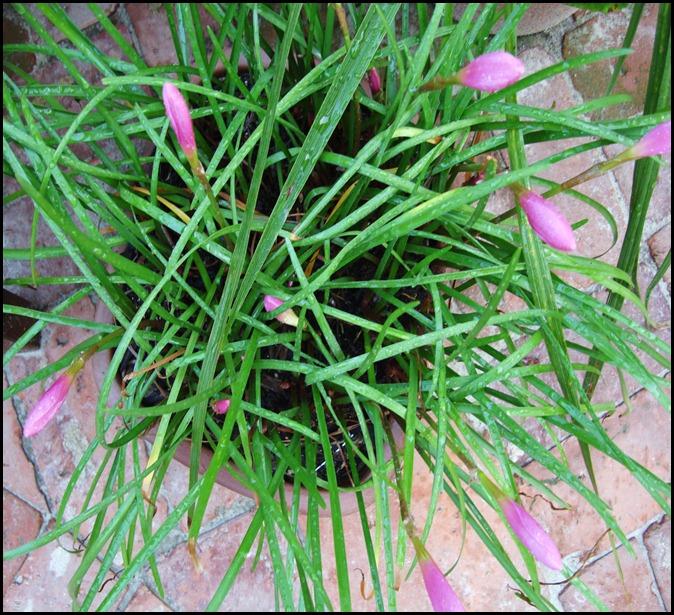July 9 my garden 004