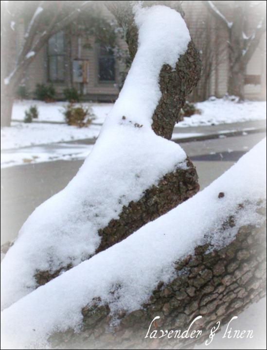 Dec. 26, 2010 - snow 034